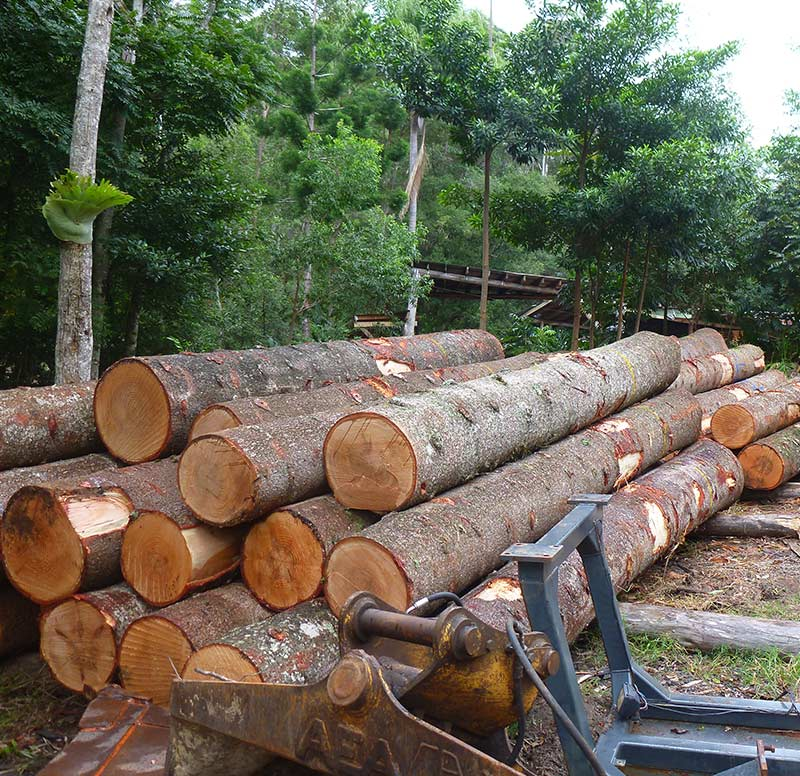 Kirby Fine Timber - wholesale luthier suppliers